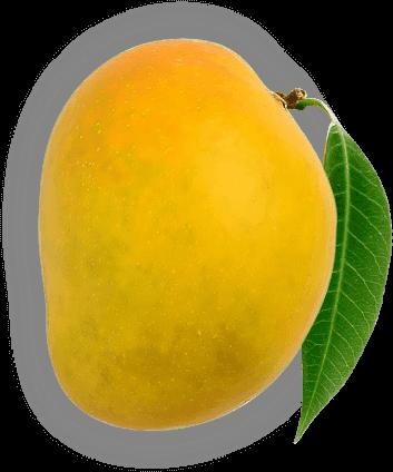 Chemically Ripened Mango