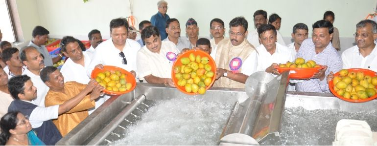 Mango Processing Factory at Devgad