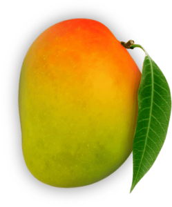 Original Alphonso Mango
