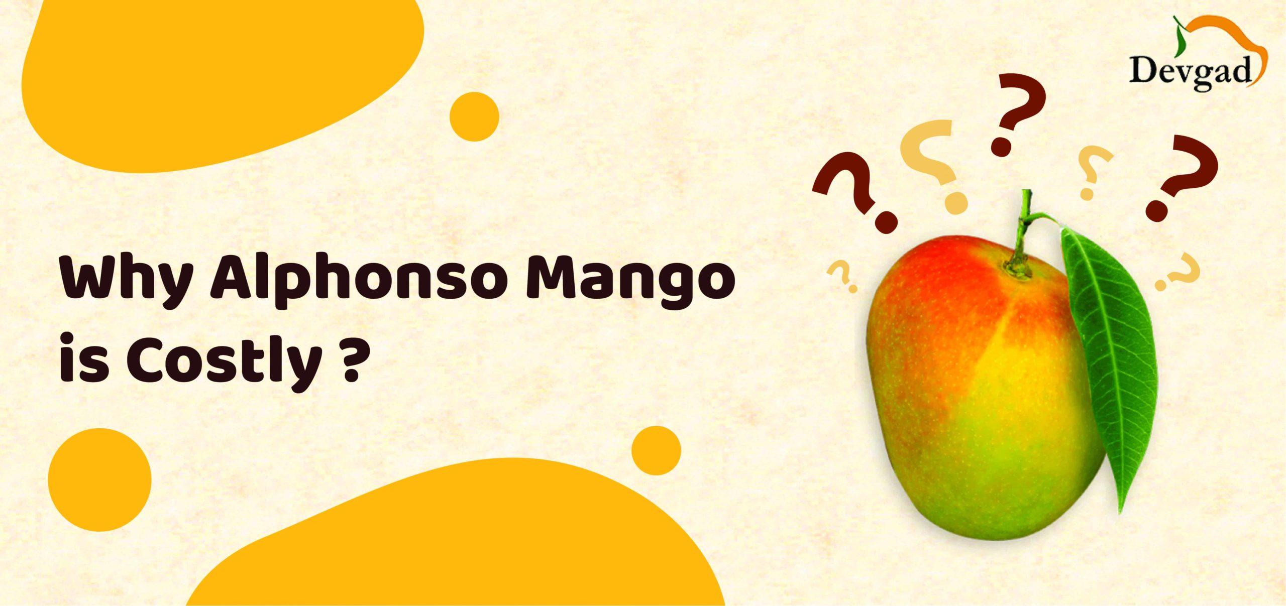 alphonso mango cost