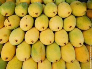 himsagar-mango